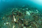 Underwater trash from populated area topside.