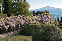 The wisteria pergola divides the garden which has Monte Amiata beyond