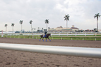 HALLANDALE BEACH, FL - JANUARY 27: Exercise rider Dana Barnes and Arrogate on the track for an easy gallop before Saturday's Pegasus World Cup at Gulfstream Park. (Photo by Arron Haggart/Eclipse Sportswire/Getty Images