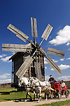Pair of white horses running by the road with a carriage full of people Spring time countryside scenic with an ancient wooden windmill under blue sky The horses have slight motion blur adding dynamics to the picture Ukraine Eastern Europe Vertical orientation
