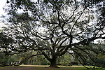The Lichgate Oak at 1401 High Rd in Tallahassee, Florida.    (Mark Wallheiser/TallahasseeStock.com)