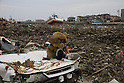 Just south of the Natori river the Yuriage area was made famous by the live NHK broadcast of the tsunami destroying its port and rolling over its fields while cars attempted to flee the deluge.  Masses of debris are pushed into piles which line roads and fields.  Someone recovered this mascot and placed it on the crushed hood of a car.