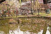 The pond next to Narahimo Shrine.