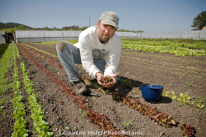 John Severn, California organic farmer with his organic baby lettuce at Little River Farm, local market farmer, Arcata California