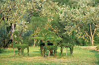 Topiary of table and chairs in the olive grove