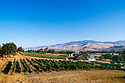 Weisinger's Vineyard & Winery and view over Rogue Valley; Ashland, Oregon..#2344-2716