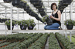 Foto: VidiPhoto<br /> <br /> ESCH&ndash; Buiten is het 0 graden, binnen zit en werkt Dagmar Vrijhof een stuk aangenamer.  In kwekerij La Serra in het Brabantse Esch snoeit en selecteert de groenstudente donderdag de mooiste citrusboompjes en bloeiende tuinplanten voor de showtuinen op TuinIdee 2017. Het grootste tuinevent van Nederland gaat volgende week donderdag 16 februari voor het 25ste jaar op rij van start in de Brabanthallen in Den Bosch met bijzondere showtuinen, diverse noviteiten en meer dan 200 groen-exposanten. Er worden meer dan 30.000 bezoekers verwacht. Citrusboompjes zijn volgens Joost Oude Alink van kwekerij La Serra razend populair. &quot;Je plukt er de vruchten van.&quot; Consumenten plukken en eten steeds meer gezond uit 'eigen tuin'.