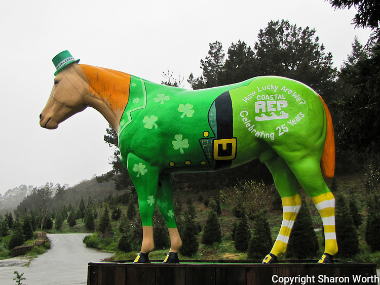 Old Paint, the statue at Lemo's Farm in Half Moon Bay, sports a coat of green with shamrocks, and a tribute to the Coastal Repertory Theater.