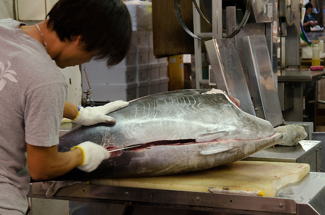 Japanese fish butcher cuts into a tuna at Tsukiji Fish Market Tokyo Japan
