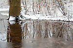Forest and Water after Fresh Snowfall - Landscape