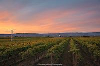 Dunham cellars 2014 harvest selects