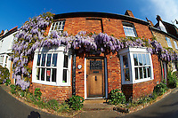 Town cottages with wisteria growing on them. Buckingham High Street, Bucks