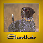 German Short Haired Pointer, GSP This design is offered on gift merchandise ONLY.<br />