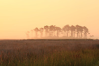 Picture of the Outer Banks marsh on Roanoke Island.