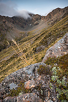 Alpine vegetation on slopes at Temple Basin, Arthur's Pass National Park, South Westland, South Island, New Zealand, NZ