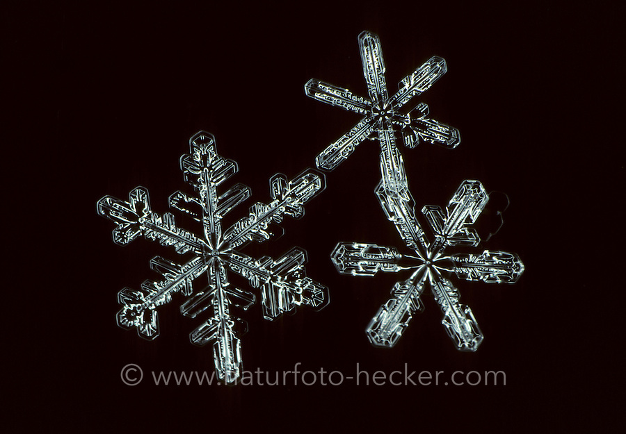 Schnee-Kristall, Schneekristall, Schnee-Kristalle, Schneekristalle, Kristall, Kristalle, Schnee, Schneeflocke, Schneeflocken, Mikroskop, Snow crystal, snow-crystal, snow crystals, snow-crystals, snow, microscope