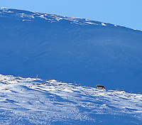 A coyote climbs a hill in Hayden Valley.