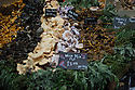 London, UK. 25.10.2014. Varieties of wild mushrooms on a stall at Borough Market, Southwark. Photograph © Jane Hobson.