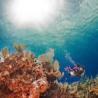 25 July 2015: SCUBA Diver Sally Herschorn explores the formations of sea fans and sponges at Lemon Reef, on the North side of Grand Cayman Island. Located in the British West Indies in the Caribbean, the Cayman Islands are renowned for excellent scuba diving, snorkeling, beaches and banking.  Mandatory Credit: Ed Wolfstein Photo *** RAW (NEF) Image File Available ***