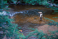 A woman fly fishes for trout on the  Yellow Dog River near Big Bay, Michigan.