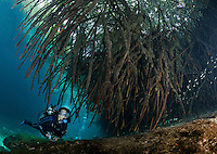 RX0485-D. scuba diver (model released) exploring the Casa Cenote freshwater sinkhole, swimming under the roots of mangrove trees. Riviera Maya, Yucatan Peninsula, Mexico.<br /> Photo Copyright &copy; Brandon Cole. All rights reserved worldwide.  www.brandoncole.com