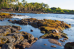 Punalu'u Park, famous for its black sand beach and green sea turtle habitat, in the district of Ka'u on the Big Island of Hawaii, USA, America