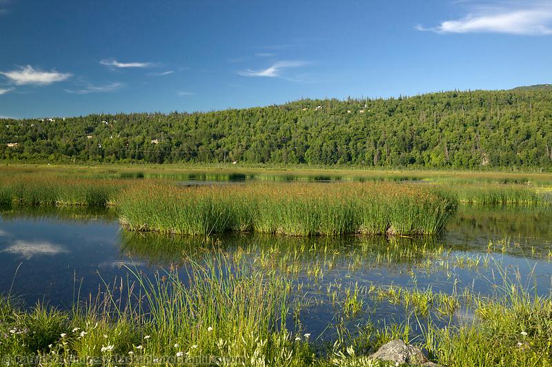 Potter Marsh near Anchorage, Alaska