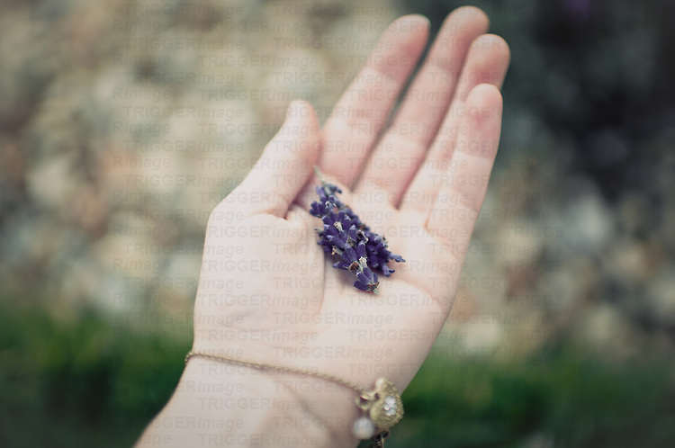 A female hand outstretched with purple lavender in the centre and a gold bracelet.