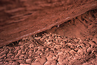Flakes of dried mud curl under the overhanging walls of Lathrop Canyon in Canyonlands National Park, Utah.