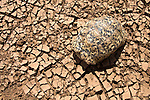 Leopard tortoise (Geochelone pardalis) seeks the only shade it can find, its shell, in the heat of the day on the dry riverbed of the Ewaso Nyiro. Kenya.... The worst drought (2008-2009) in more than a decade has killed most domestic livestock and many wild animals in northern Kenya.