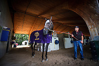 HALLANDALE BEACH, FL - JAN 27: Arrogate takes in the sights at Gulfstream Park Race Course with assistant trainer Jimmy Barnes on January 27, 2017 in Hallandale Beach, Florida. (Photo by Alex Evers/Eclipse Sportswire/Getty Images)