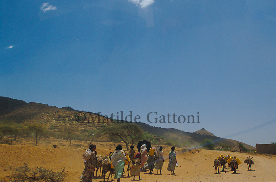 Eritrea - Debub- Villagers walking back to their village after collecting water from the nearest well. As a result of 30 years of war for independence against Ethiopia (from 1961 to 1991) and another 3 years from 1997 to 2000, there are 50,000 Eritreans currently living in internally displaced (IDP) camps throughout the country. These IDPs have fled three times in the last 10 years, each time because of renewed military conflict. They lived in relatives' homes when lucky enough, but mostly, the fled to the mountains, where they attempted to do what Eritreans do best, survive. Currently there is no Ethiopian occupation in Eritrea, but landmines prevent the IDPs from finally going home. .It is estimated that every Eritrean family lost two or three members to the war which makes the reality of the current emergency situation even more painful for Eritreans worldwide. Currently, the male population has been decreased dramatically, affecting the most fundamental socio-economic systems in the country. Among the refugee population, an overwhelming majority of families are female-headed, severely affecting agricultural production. For, IDPs in particular, 80% of households are female-headed..The unresolved border dispute with Ethiopia remains the most important drawback to Eritrea's socio-economic development, as national resources (human and material) continue to be prioritized for national defense. Eritrea is vulnerable to recurrent droughts and variable weather conditions with potentially negative effects on the 80 percent of the population that depend on agriculture and pastoralism as main sources of livelihood. The situation has been exacerbated by the unresolved border dispute, resulting in economic stagnation, lack of food security and increased susceptibility of the population to various ailments including communicable diseases and malnutrition..