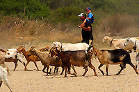 Goat herd on Ios, Cyclades Islands, Greece