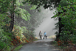 Dog walkers on Pipeline Rd. at Henry Cowell Redwoods State Park