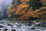 Autumn shows in the colorful leaves on the trees along a creek in New Hampshire.