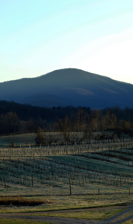 Oasis Winery says in their brochure that they are rated top 10 in the world. The vineyards are located in Hume Virginia.