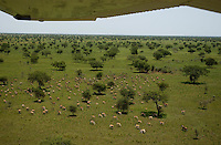 The Boma-Jonglei Landscape is home to some of the most spectacular and important wildlife populations, including  perhaps the largest wildlife migration in the world. An annual migration of  antelope colled the white-eared kob may rival the famous wildebeest migration of the Serengeti in neighboring Kenya and Tanzania.  (PHOTO: MIGUEL JUAREZ LUGO)