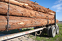 A close up of Redwood trunks on lorry. Davenport, California, USA