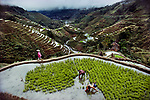 Rice paddy fields, Banaue, Philippines, 1985<br />
