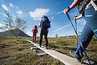 Group of hikers walk on wooden planks under blue sky, near Abiskojaure hut, Kungsleden trail, Lapland, Sweden