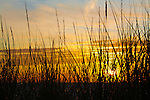 Grasses in the Dunes at Sunset