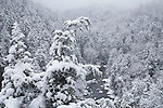 Winter snow storm anlong the Linville River, Linville Gorge Wilderness
