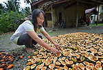 Masariah Hia dries cacao in front of her home in Tugala, a village on the Indonesian island of Nias. <br /> <br /> The village was struck by both a 2004 tsunami and a 2005 earthquake, leaving houses destroyed and lives disrupted. The ACT Alliance helped villagers here to construct new homes and latrines, build a potable water system, open a clinic and schools and get their lives going once again. For the residents of Tugala, the post-disaster mantra of &quot;build back better&quot; became a reality with help from the ACT Alliance.
