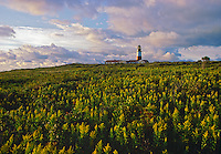 Massachusetts, Nantucket, Sankaty Head Ligthhouse, Sunrise
