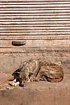 Dog-Bazaar in Taj Ganj, Agra