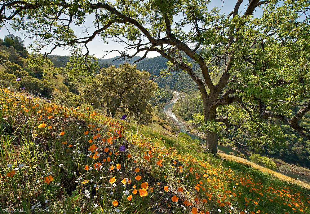 American River Canyon in Spring