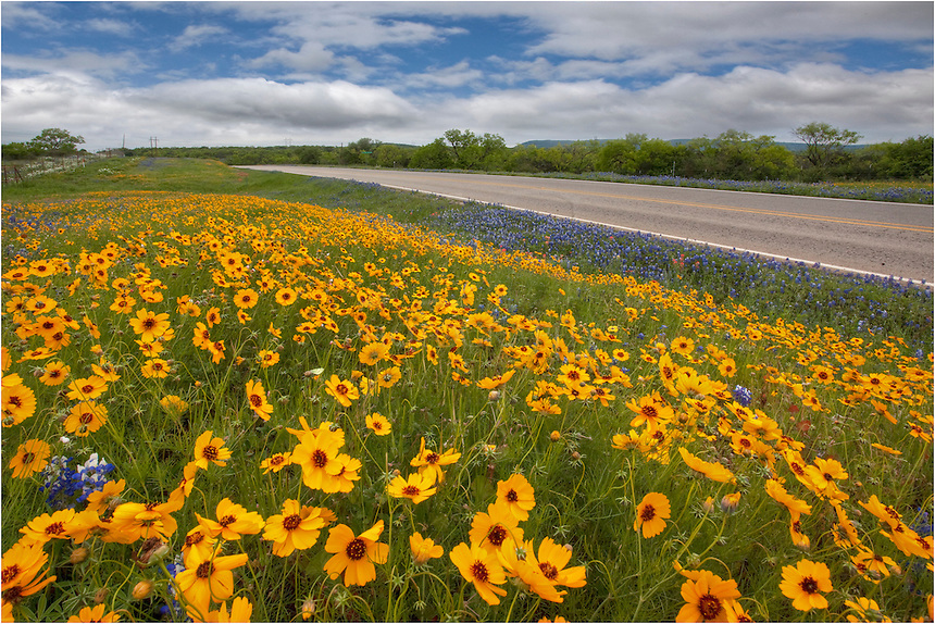 Between Marble Falls and Llano, Texas, these beautiful golden wildflower graced the roadsides. This view was taken looking southeast in the late afternoon.