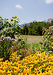 Butterfly gardens surround the parking area at Jefferson Vineyards.