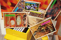 Honeybee educational materials in US