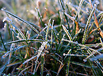 Frost covered grass.  ©2013. Jim Bryant Photo. All Rights Reserved.